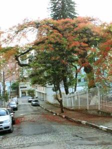 árvore da minha rua