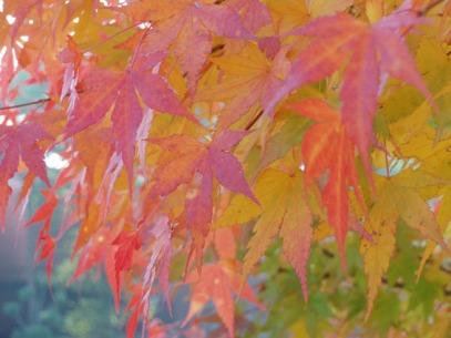 outono momiji