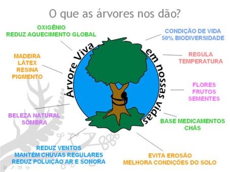 o que a árvore nos dá?