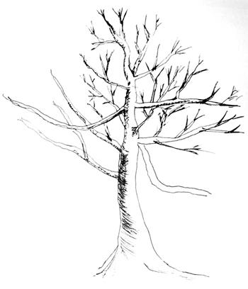 árvore nua esboçada