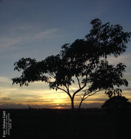 pôr do sol - Tietê / SP