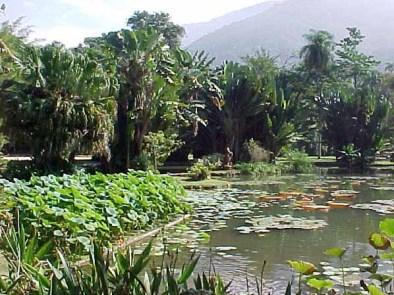 Lago Frei Leandro / Deusa Tétis / Victoria Régia