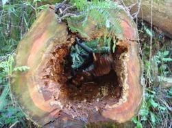 colorido oco da árvore ca�da