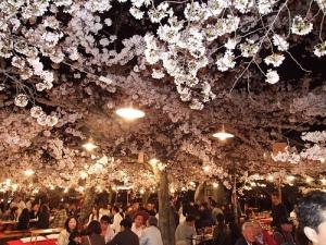 Céu de cerejeiras