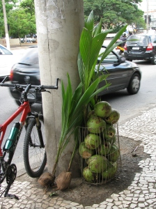 muda de coqueiro-da-bahia na banca de coco do Zé Maria