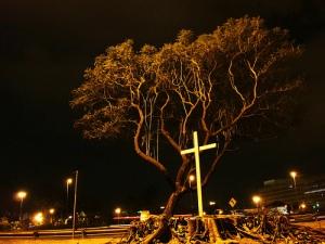Luto por nossas Árvores da Marginal Tietê - enterro simbólico