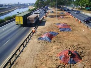 """falsas-serigueiras suprimidas no canteiro da Marginal Tietê - Ponte Cruzeiro do Sul ao lado do Shopping D - cobertas com plástico para """"não causar impactos"""" - foto Luciano Ogura"""