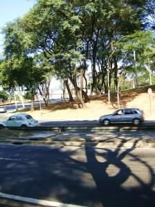 nem a sombra desta árvore sobreviverá!!! - Vamos fritar no asfalto!!! - foto JuÁrvore