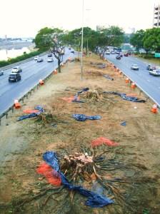 matança geral da vida na marginal - ponte Cruzeiro do Sul - foto de Luciano Ogura