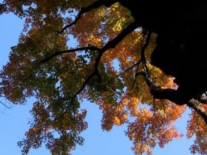SkyWatch: Looking up at Trees