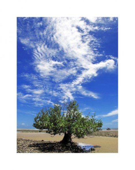 árvore preferida do fotógrafo Dorival Moreira localizada em CUMURUXATIBA - BA