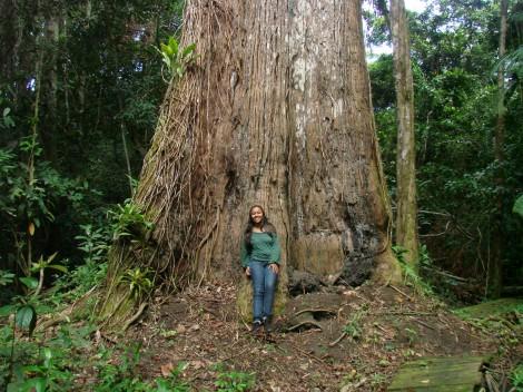 Sapucaia do Tarcísio e da Mônica - apaixonados por árvores - eles cuidam dela com muito carinho, e espalham os ensinamentos sobre a importância das árvores no Sul da Bahia em Sapucaia do Sul