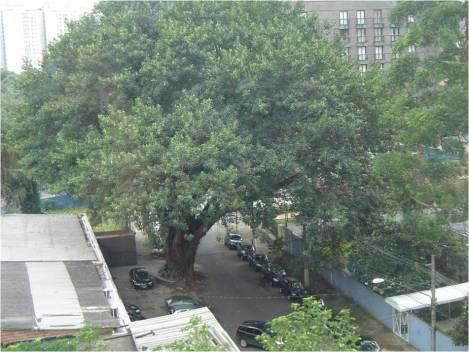 destaque para uma das árvores que mais sabe receber e acolher os convidados!!