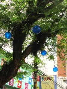 Tipuana tipu com bolas decorativas de natal - Pinheiros - Rua Francisco Leitão