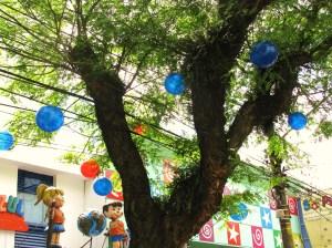 Bolas Azuis e Vermelhas decoram a Tipuana, espécie originária da Bolívia muito comum na arborização da cidade de São Paulo