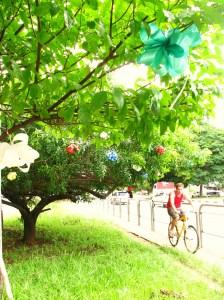 o ciclista, sábio, aproveita a linda visão das árvores enfeitadas especialmente para o fim de ano!!