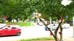 goiabeira toda formosa se exibindo para os carros que passam na avenida!