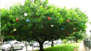 aroreira com laços de festa!!! Poderia ser eleita nossa árvore de natal