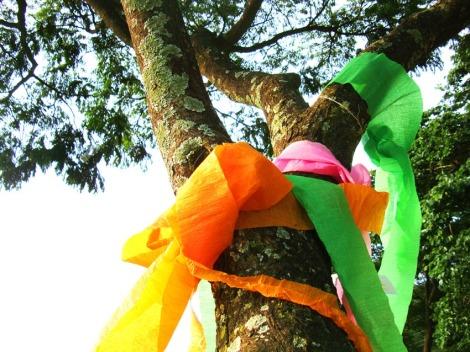 Celebrando as Árvores