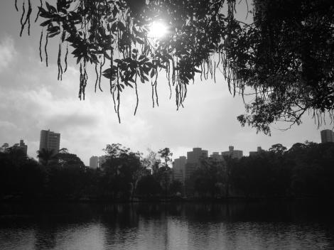 Paisagem natural no Parque da Aclimação - foto por Luciano Ogura Buralli