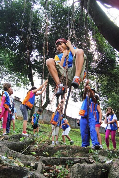 balançando e brincando sob a grandiosa falsa-seringueira - foto Luciano Ogura