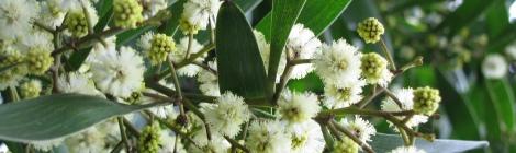 lindas flores no início da primavera