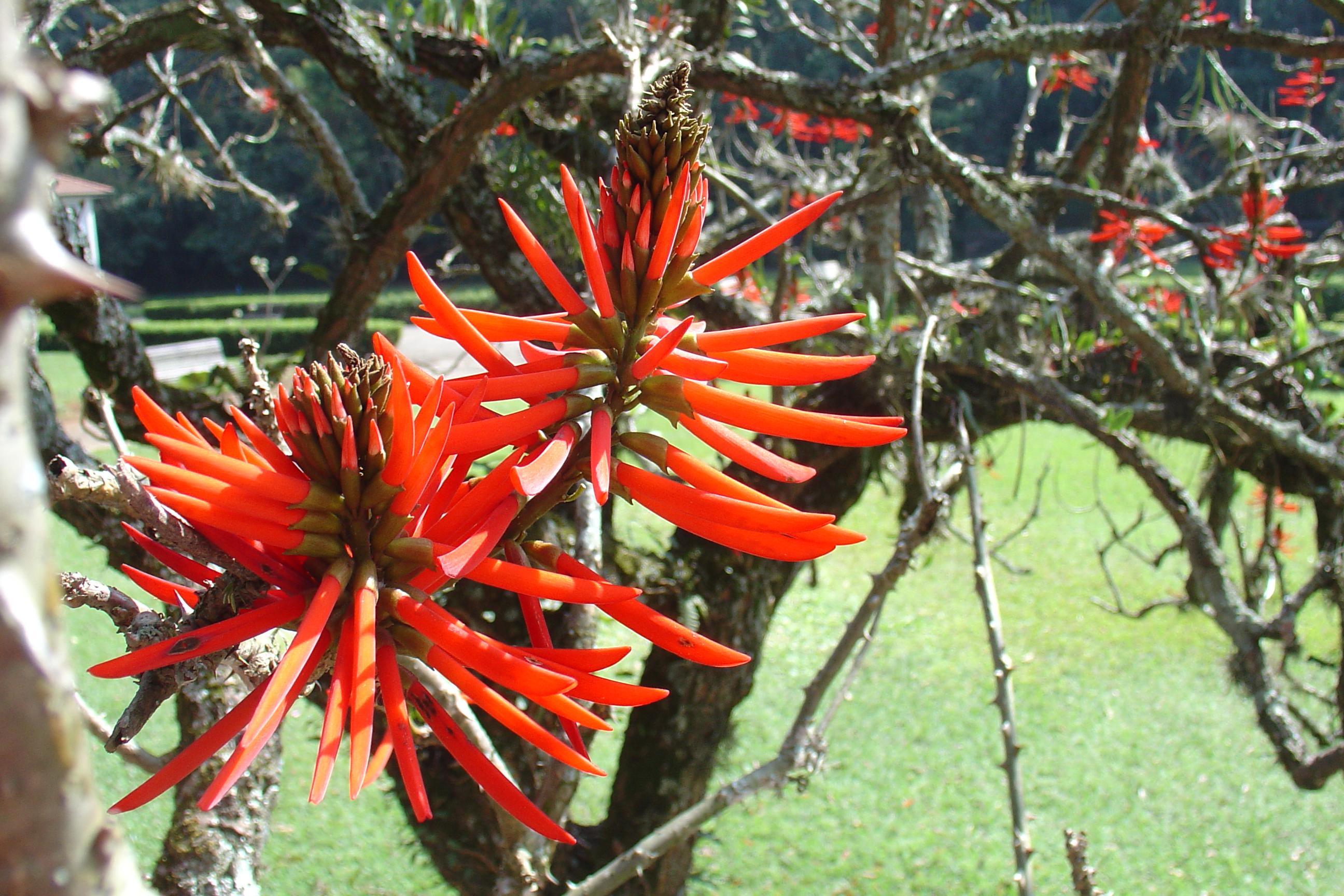 ipe de jardim botânico:Ah inverno…