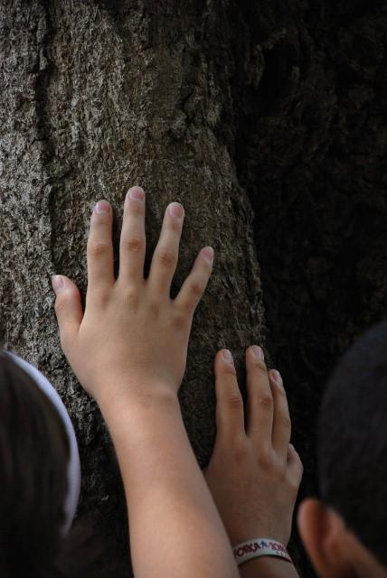 foto renata albuquerque - PASSEIO VERDE: conhecendo mais sobre as árvores da nossa cidade!