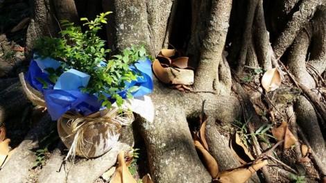 Celebrar-floresfrutossabores-vida-e1452467230209