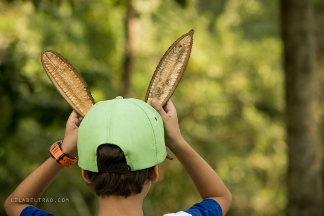 Festival Cultivar - Hosto Florestal