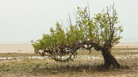 passeio-verde-raiz