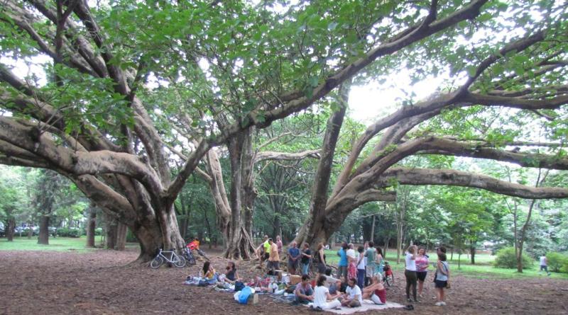 Preservar as árvores mais antigas e amar a natureza que somos