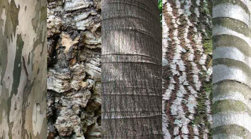 As árvores e o universo em suas cascas